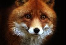 Foxy / by Vonne Lara