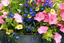 Gardening / by Toni Marlow
