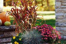 Container gardening / by Debbie Witt