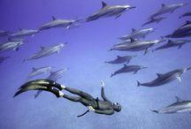 Scuba Diving Heaven / by Rachelle Lynn