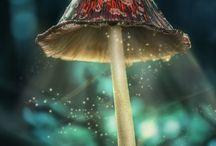 Mushrooms / Mushrooms / by Jean Sredl Quick2ListenFiberArt