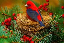 Beautiful Birds / by Patricia Parker
