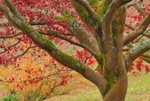 Trees ♥♥ / by Beneath the Rowan Tree