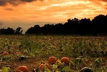 Autumn Love / by Robin Swanson