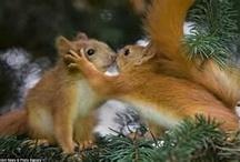 animals - chipmunks/ squirrels / by Cindy Hertz