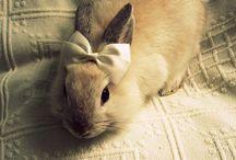 Bunny LOVE / by Tess Thrasher