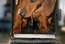 Earth's Angels-Doxies / by Susan Carlson