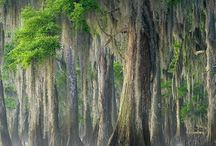 Trees all around the world / Trees, bushes  / by Sue Capps