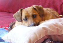 Cuddly canines and other cuties / by Darlene Whalley