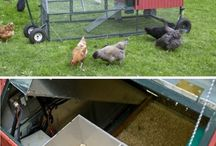 Chickens! / by Nichole Stains