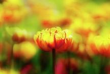 Nature's Beauty / by Brigett Cavanaugh Peterson