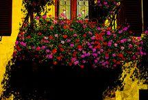 Wonderful Windows / by Patty Gerker