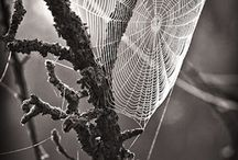 Photography / by Zsolt Schvets