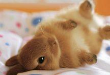 chloe: cute  animals / by Angela Dunn
