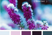 Colors / by Anna Bolena Melendez