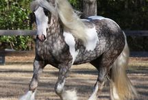 Horses♡♡ / I love horses!! I would love to have a horse someday!  / by Sandra O'Neal