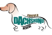 Adoptable Dachshunds  / by Furever Dachshund
