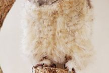 Animals  / by Jessica Narron