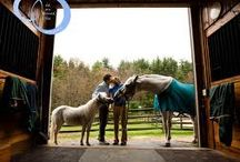 Inside an Equestrian's Life / by Claire