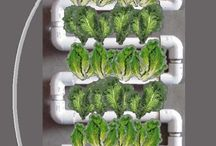 Hydroponics / by Annette McIntyre