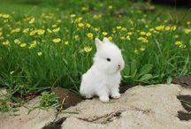 love bunny x / by Katie Brain