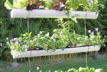 Garden Ideas / by Helen Yoest @Gardening with Confidence