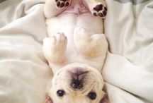 French Bulldogs...I want one!! / by Carrie Strohl