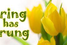 spring / by Donna Hyland