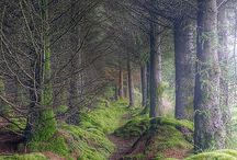 UK & Ireland Travel Ideas / Currently just pinning stuff that looks cool for now.  / by Elaine Ballou