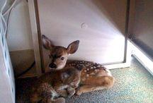 Deer / by Kim Reynard