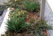 Front Yard Project / by Molly Johnston