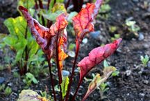 fall gardens / by Joy Jenkins