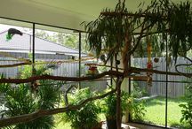 Aviary / my dream of the new aviary,planning,design and the birdies that will reside there..the ones I have now,and the ones I hope to get :) / by Sue Homer