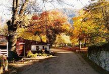 Oak Glen - California Apple Picking / by Peggy Kellen
