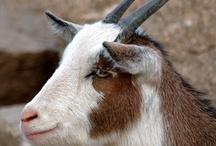 Goat People / by Marshal Uhls