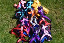 Dog Harnesses / A selection of dog harnesses which can be used for many different activities, including canicross, bikejoring, sled dog racing, dog scootering and dog walking. / by Snowpaw Store