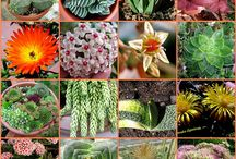 I LOVE these amazing plants / by Denise Cabral