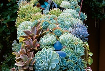 Succulents / by Herta