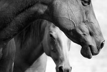 Love those horses! / by Pam Angel