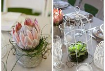 Succulent Creations.... / by Sandi Padworski-Woods