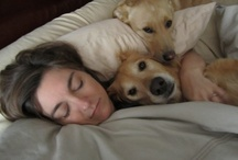 Dogs in Beds (generally not theirs) / by We Love Dogs ♥ Guide Dogs Worldwide ♥