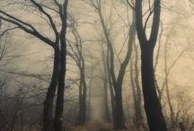 ℒa  ℳisteriosa / SAN MARTINO -  La nebbia agli irti colli Piovigginando sale, E sotto il maestrale urla e biancheggia il mare; Ma per le vie del borgo Dal ribollir dè tini Va l'aspro odor de i vini L'anime a rallegrar. Gira sù ceppi accesi Lo spiedo scoppiettando: Sta il cacciator fischiando Su l'uscio a rimirar Tra le rossastre nubi Stormi d'uccelli neri, Com'esuli pensieri, Nel vespero migrar. -- Giosuè Carducci / by ❀ Anna Maria ❧✿*゚☉