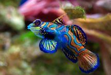 Aquatic Inspirations / by Ursula Keogh