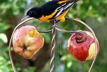 bird / by Susan Bellarosa