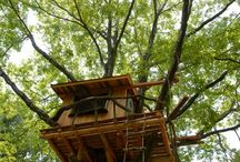 Treehouses / by Aivar Ruukel