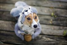 Corgified  / mostly corgi's and maybe a few other cute creatures / by Martha Obermiller