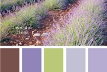 Color Inspirations / by Ms Monette .
