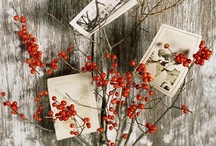 autumn flowers / by Linda van der Ham