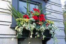 Window Boxes / I couldn't be more in love with pretty flowers for the home (inside and out). / by Ashley Beck