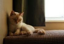 Cat / by Alissa @CraftyEndeavor.com
